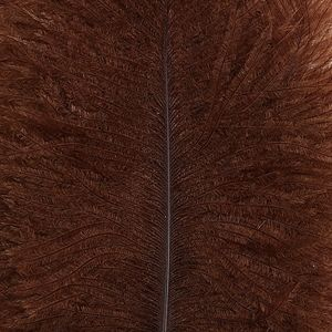Spey Plumes Brown