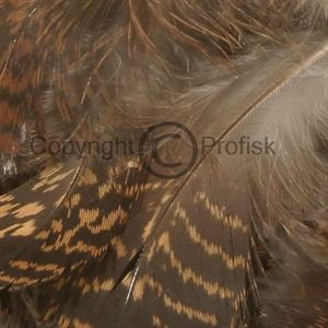 Rype kropsfjer Natural brownspeck