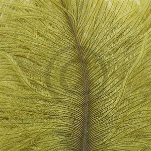 Spey Plumes Light Olive